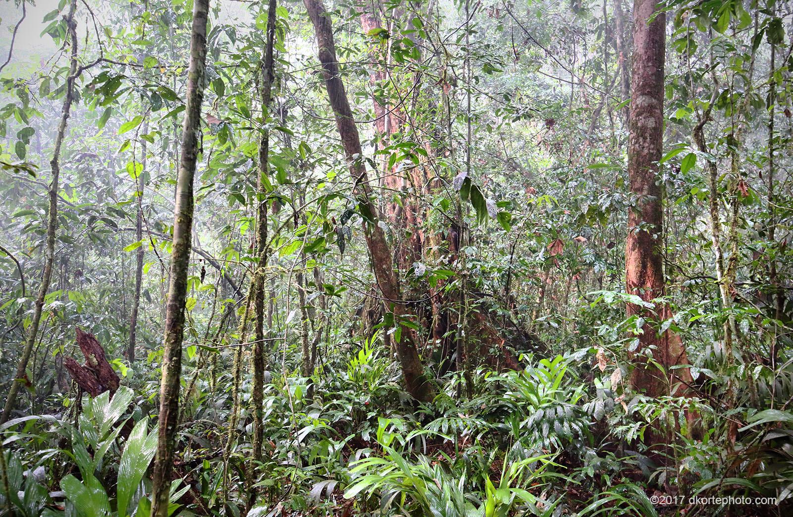 Liberia's Natural Resources